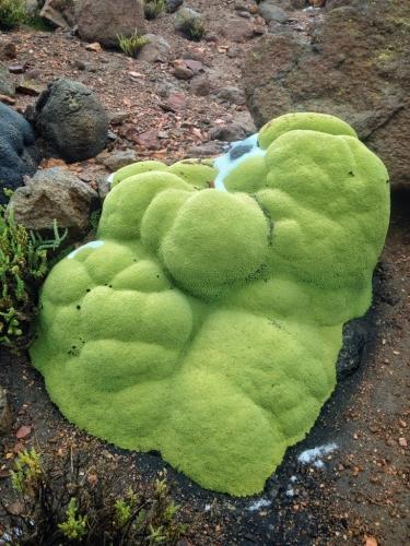 Chachani Green Moss Rocks