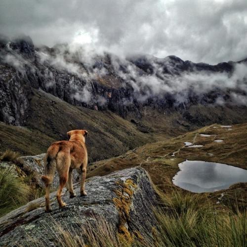 Perro Overlooking Mountain Santa Cruz Trek