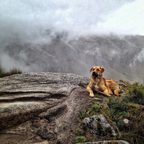 Perro Santa Cruz Trek Hiking Trail Lookout Peru