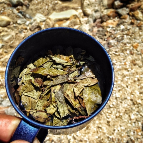 Los Nevados Coca Tea Altitude Sickness Colombia